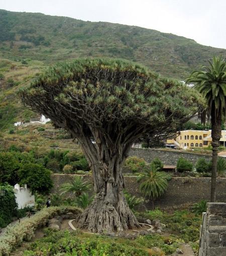 Отдых -  остров Тенерифе, Испания.