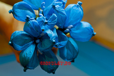 Цветы из гофрированной бумаги мастер класс