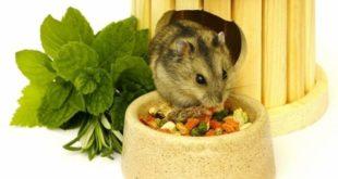 Чем кормить джунгарика?